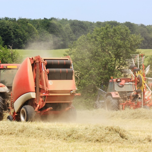 Hay and silage
